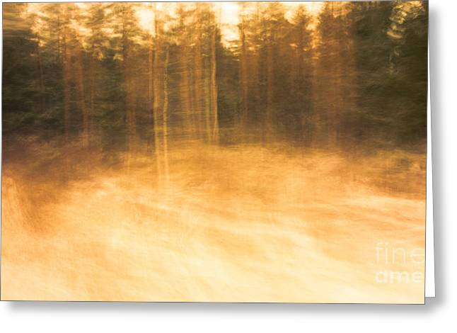 Storm In The Forest Greeting Card