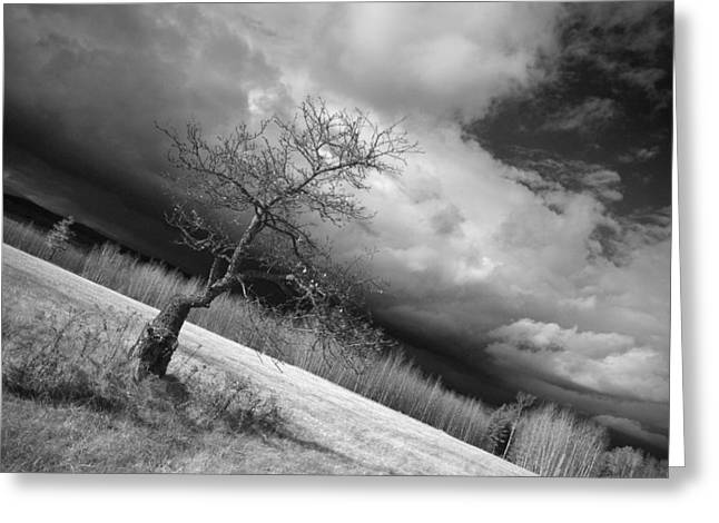Storm Over Dead River Greeting Card
