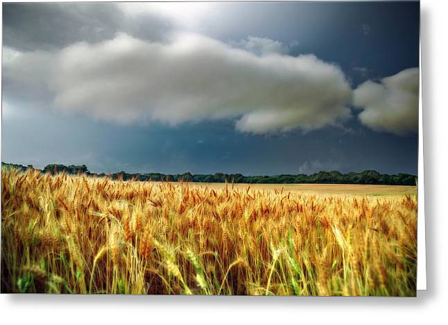Storm Over Ripening Wheat Greeting Card
