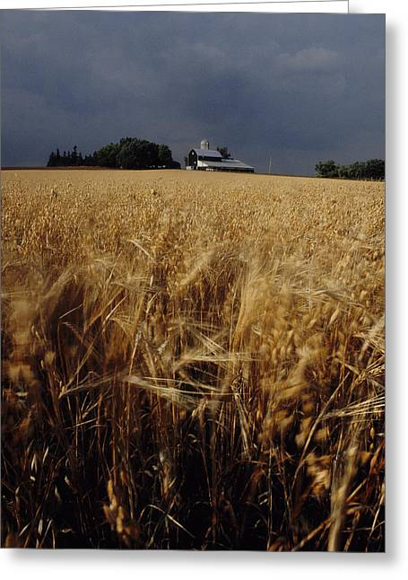 Storm Over Wheat Field  Greeting Card