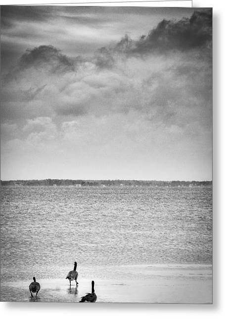 Canada Geese - Currituck Sound Greeting Card