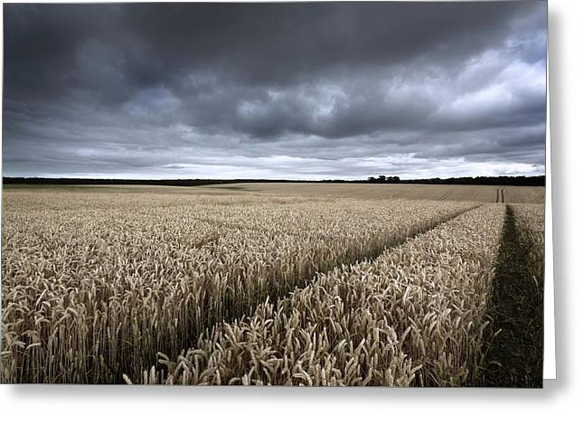 Stormy Cornfields Greeting Card by Ian Hufton