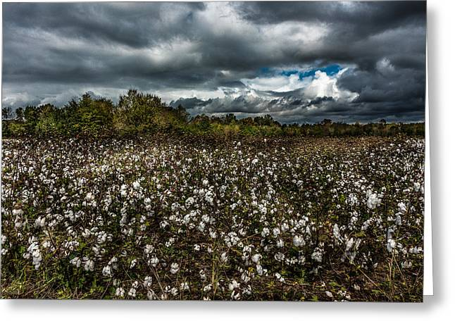Stormy Cotton Field Greeting Card