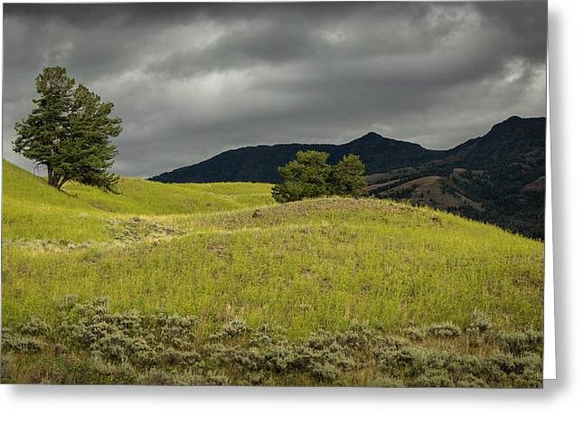Stormy Fields Of Yellow Greeting Card