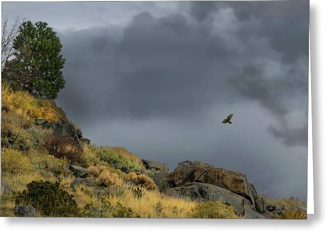 Greeting Card featuring the photograph Stormy Flight by Frank Wilson