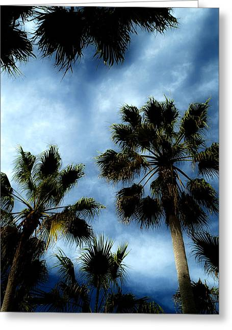 Stormy Palms 2 Greeting Card