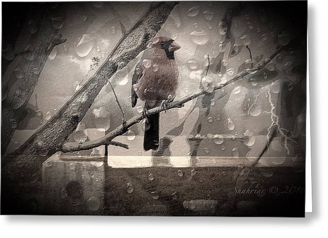 Stormy Window Greeting Card