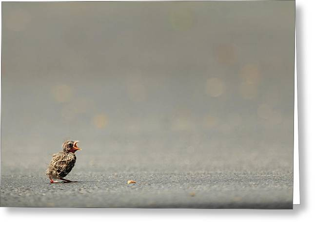 Story Of The Baby Chipping Sparrow 3 Of 10 Greeting Card