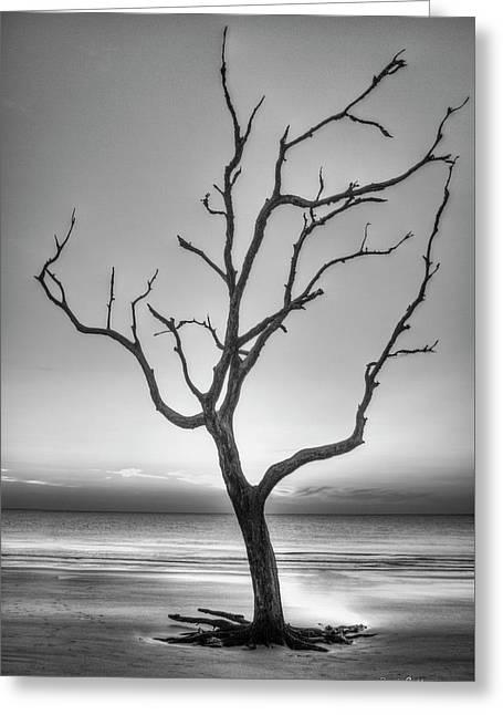Stranded 2 Driftwood Beach Sunrise Jekyll Island Georgia Art Greeting Card by Reid Callaway
