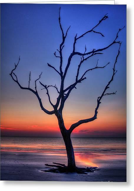Stranded Driftwood Beach Sunrise Jekyll Island Georgia Greeting Card by Reid Callaway