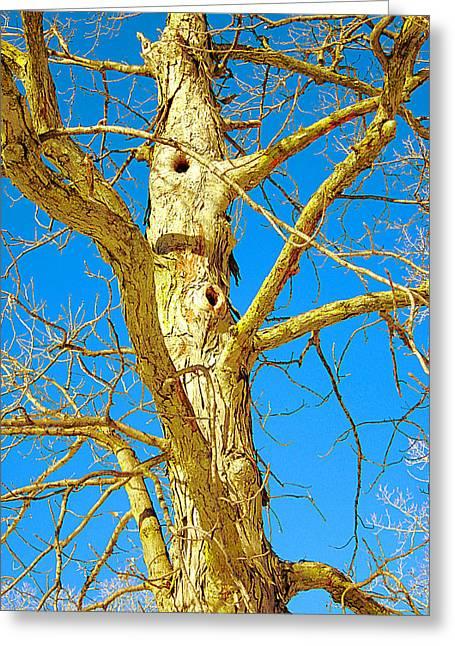 Strange Tree Greeting Card