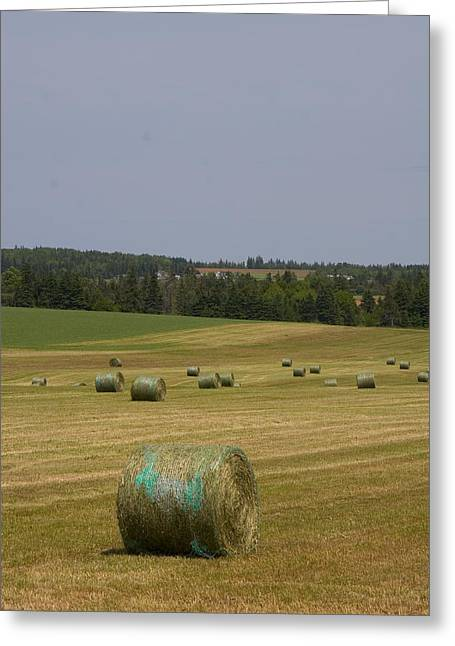 Straw Dries In A Farmers Field Greeting Card by Taylor S. Kennedy