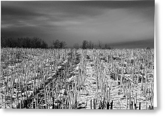 Straw Fields Greeting Card by Brian Sereda