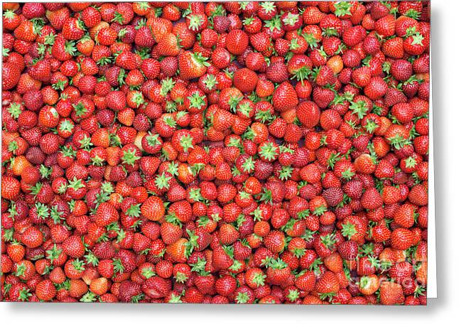 Strawberry Fest Greeting Card by Tim Gainey