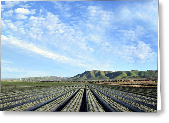 Greeting Card featuring the photograph Strawberry Fields Forever 2 by Floyd Snyder