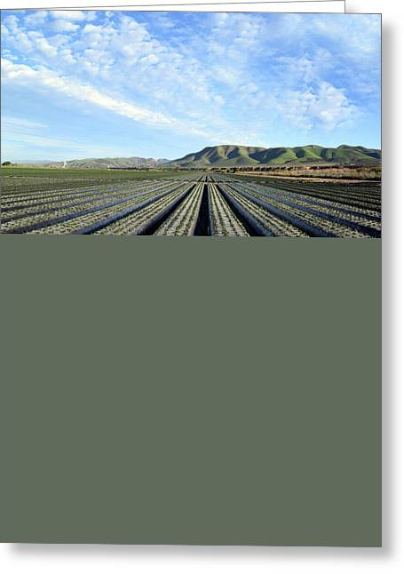 Greeting Card featuring the photograph Strawberry Fields Forever 3 by Floyd Snyder