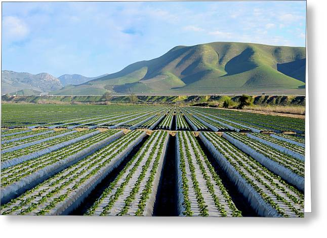 Greeting Card featuring the photograph Strawberry Fields Forever by Floyd Snyder