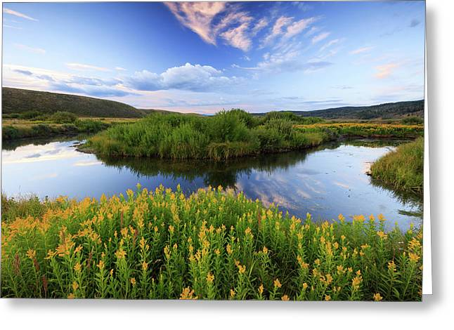 Greeting Card featuring the photograph Strawberry River With Summer Flowers. by Johnny Adolphson