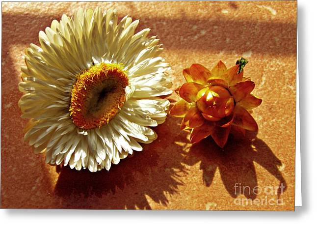 Strawflowers On The Window Sill 1                         Greeting Card