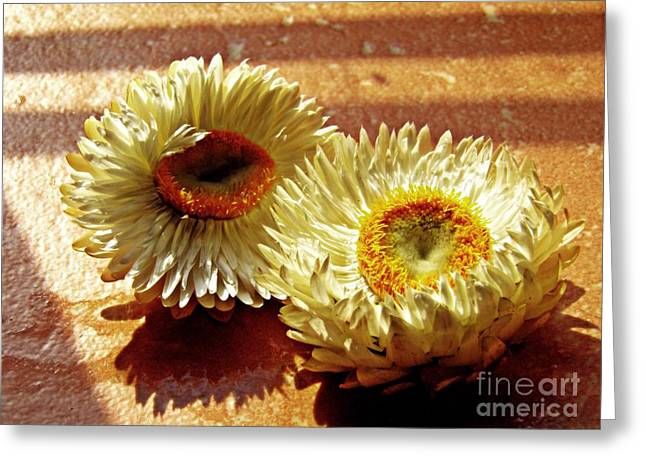 Strawflowers On The Window Sill 2 Greeting Card