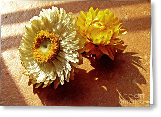 Strawflowers On The Window Sill 5 Greeting Card