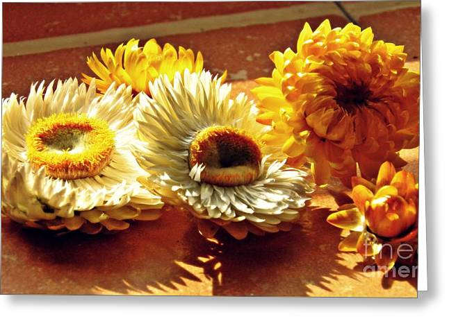 Strawflowers On The Window Sill 8 Greeting Card