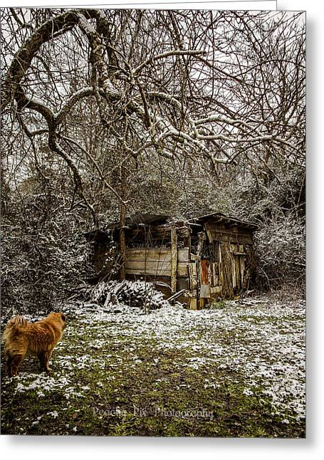 Stray And Decay Greeting Card by Stacy Sikes