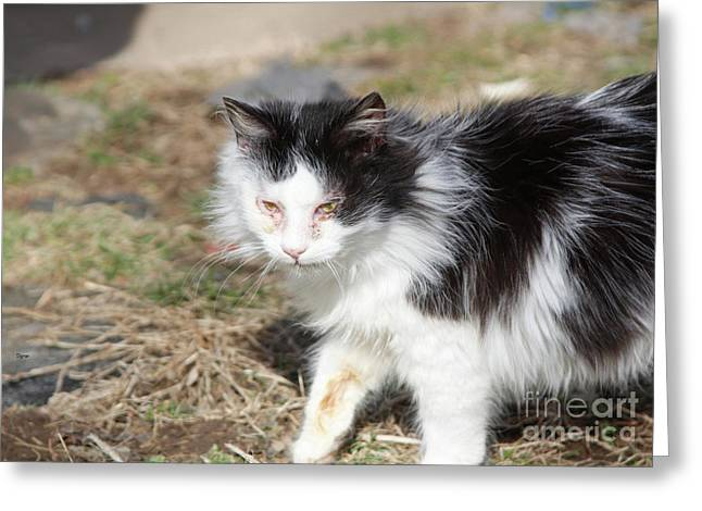 Stray Beauty  Greeting Card by Steven Digman