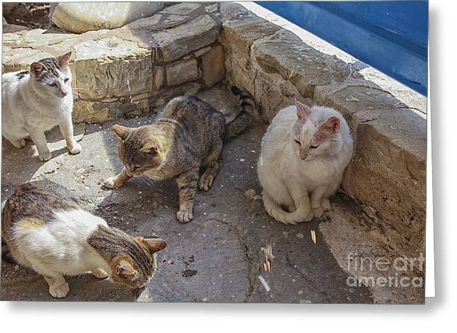 Stray Cats  Greeting Card by Patricia Hofmeester