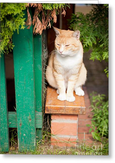 Stray Waif Red Cat Sitting Greeting Card