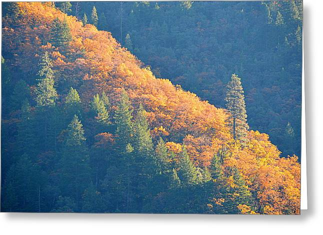 Greeting Card featuring the photograph Streak Of Gold by AJ Schibig