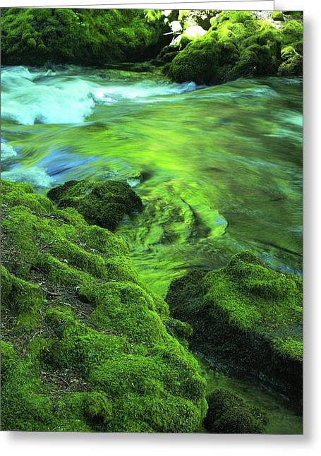 Stream Above Whitehorse Falls Greeting Card by Teri Schuster