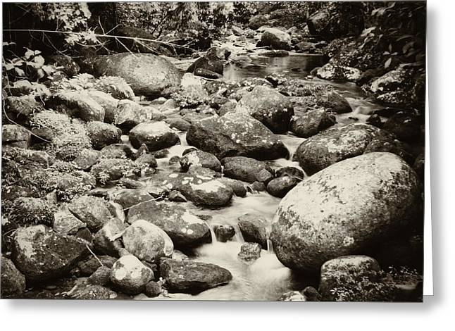 Greeting Card featuring the photograph Nature In Silent by Amarildo Correa