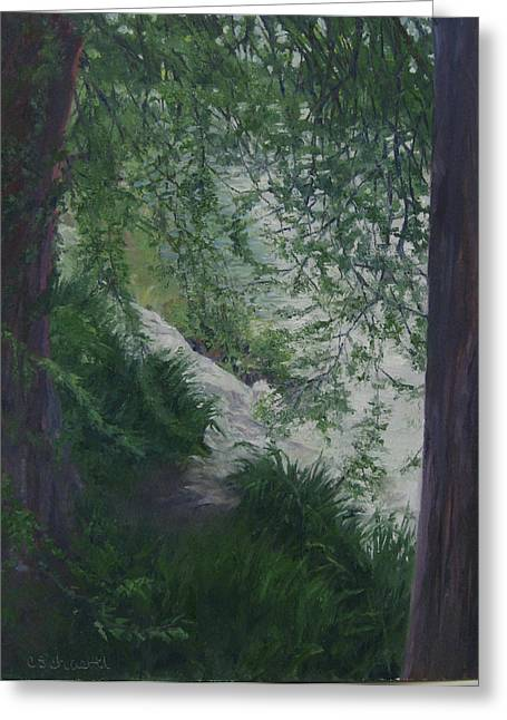 Stream From The Shady Trees Greeting Card by Connie Schaertl