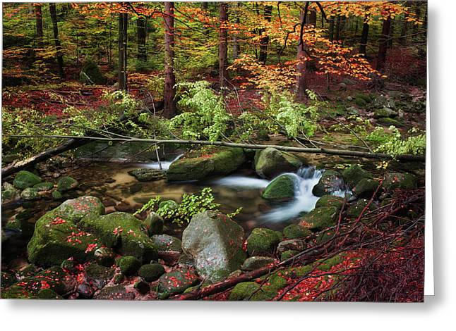 Stream In Autumn Forest Greeting Card