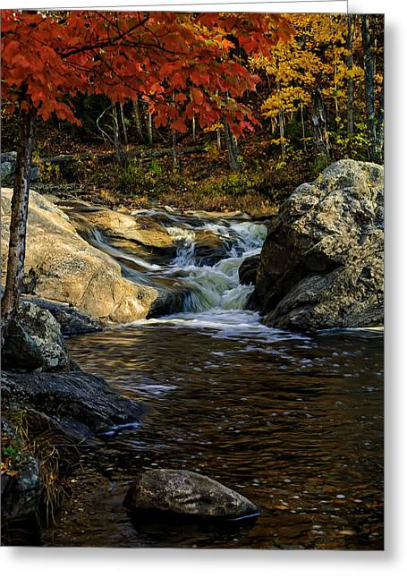 Greeting Card featuring the photograph Stream In Autumn No.17 by Mark Myhaver