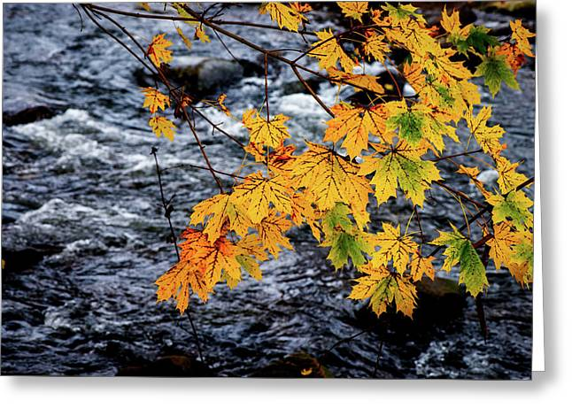 Stream In Fall Greeting Card