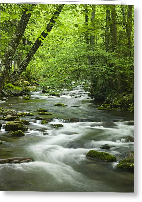 Rapids Greeting Cards - Stream in the Smokies Greeting Card by Andrew Soundarajan