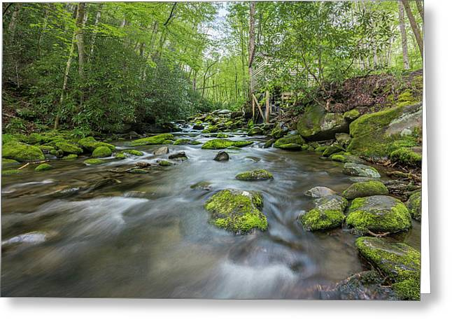 Stream In The Smokies Greeting Card by Jon Glaser