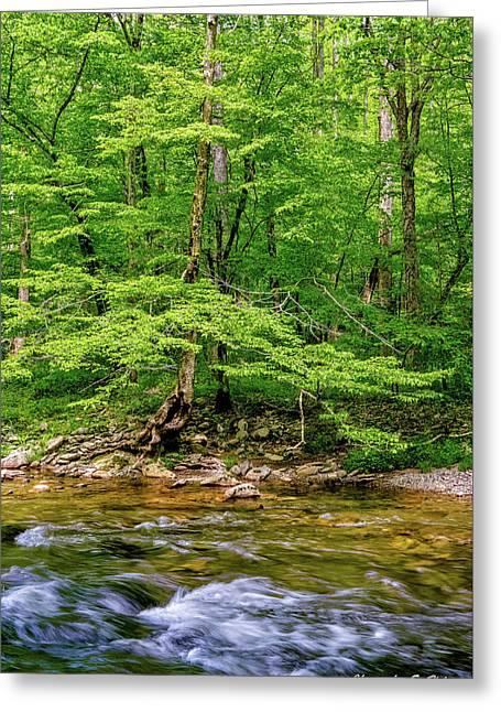 Greeting Card featuring the photograph Stream Side by Christopher Holmes