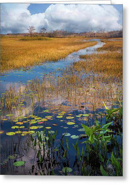 Greeting Card featuring the photograph Stream Through The Everglades by Debra and Dave Vanderlaan