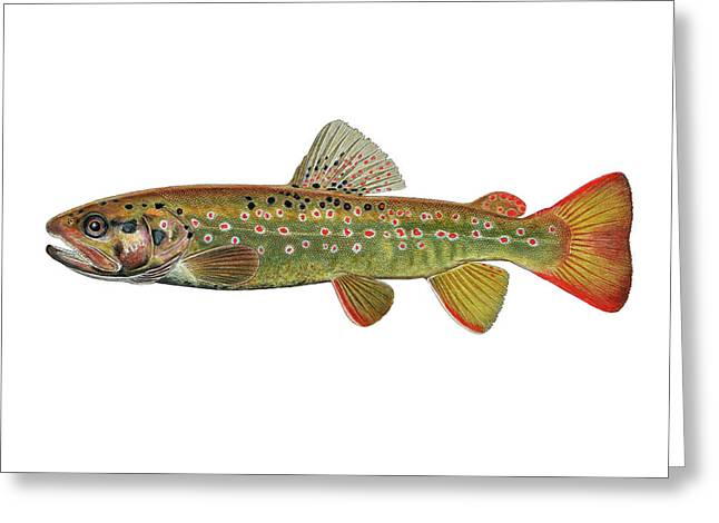 Stream Trout Greeting Card by Paul Vecsei