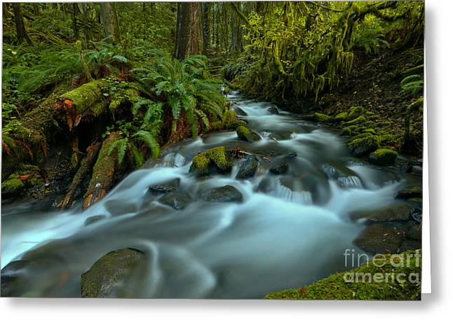 Streaming Around The Ferns Greeting Card by Adam Jewell