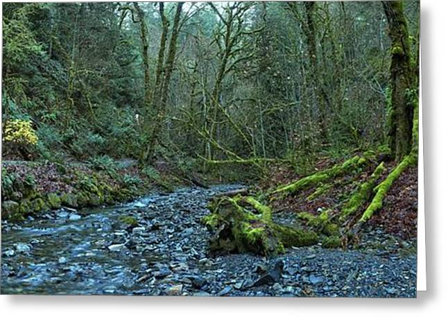 Streaming Through Goldstream Greeting Card by Adam Jewell