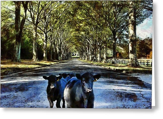 Street Cows Greeting Card