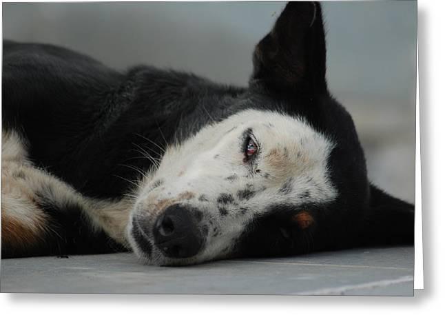 Street Dog Greeting Card