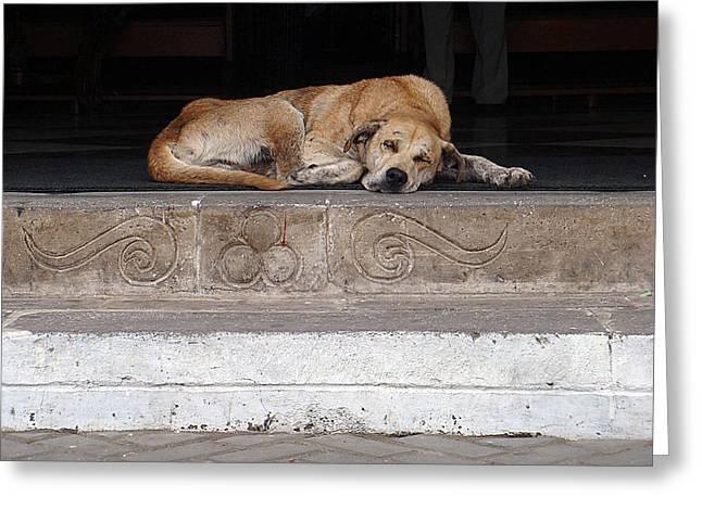 Street Dog Sleeping On Steps Greeting Card