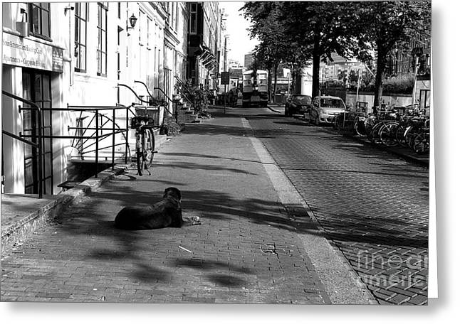 Street Guard In Amsterdam Mono Greeting Card by John Rizzuto
