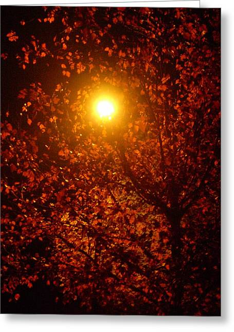 Streetlamp Through Tree Greeting Card by Utopia Concepts