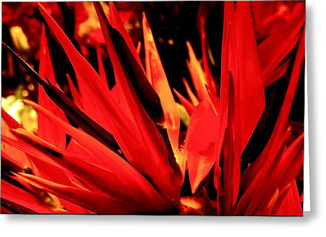 Strelitzia Abstract Greeting Card by Bonnie See